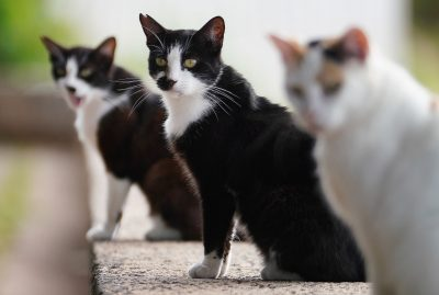 Why The Pandemic Made It Harder To Protect Birds From Hawaii's Feral Cats
