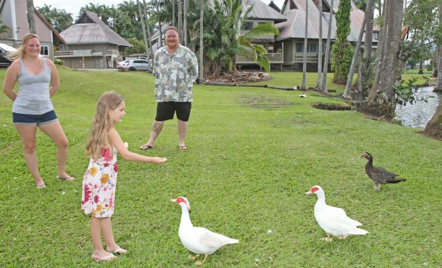Brenya Bailey (age 5) loves to feed geese and ducks on the grounds of Waiakea Villas as her parents Michael and Shirlene, look on. Waiakea Villas is the only home Brenya has known as the family face an upcoming eviction in August. Photo: Tim Wright