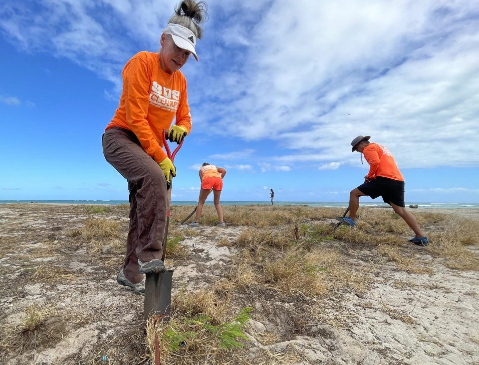 """Shelagh Sayers (left) and other volunteers with 808 Cleanup remove invasive weeds from the sand at Nimitz Beach in Kapolei, on Wednesday, August 4, 2021. When asked why she was volunteering Sayers said, """"I love the beach and I want everyone to be able to enjoy it in the clean and pure state that it should be in"""". (Ronen Zilberman photo Civil Beat)"""