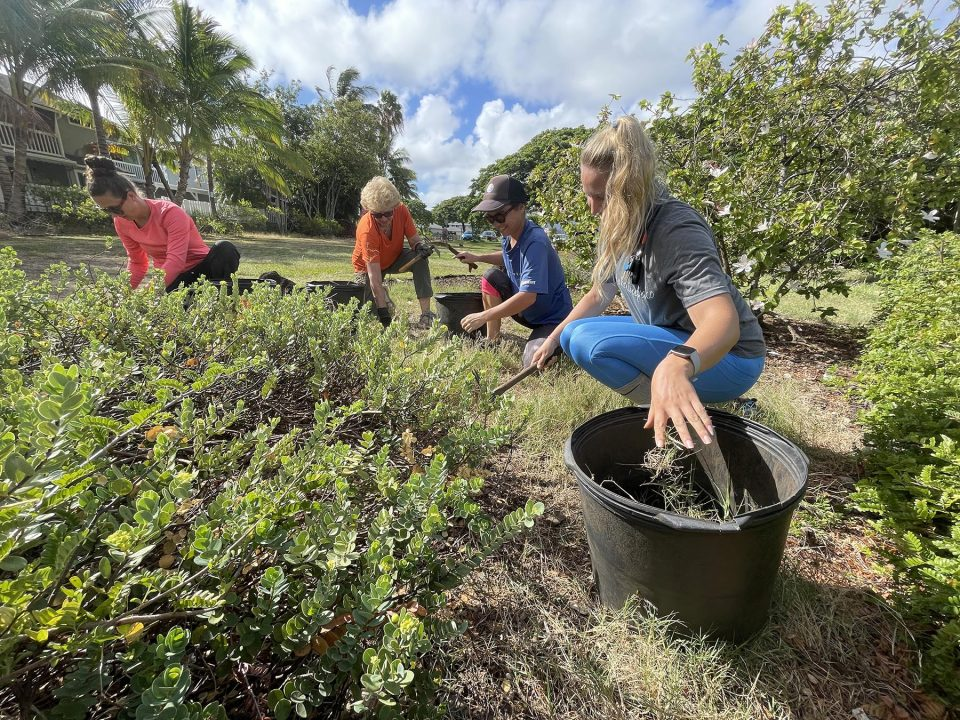 From left, Mikaelia Ziegler, Marie Sode, Maya Galante, and Lane Morrow volunteer, at the Kaha Garden in Kailua, to remove weeds from native plants on Friday, August 13, 2021. Community volunteers of all ages are taught to identify the native and Invasive plants, how to properly propagate and where to plant different species to maximize their ecological benefits, and how to properly remove invasive species. Community workdays are held every other month at this site. (Ronen Zilberman photo Civil Beat)