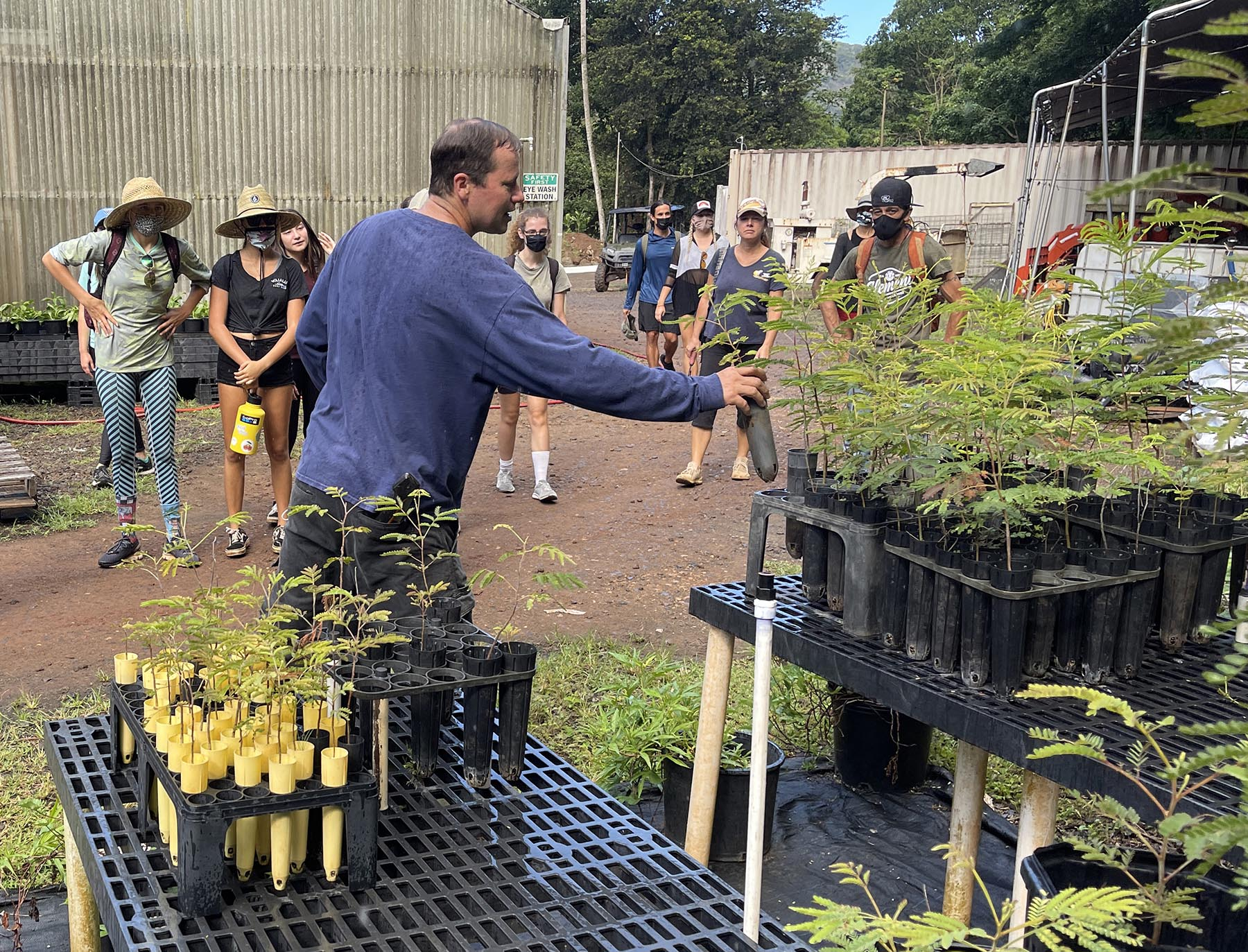 <p>Chad Middleton, Hi'ipaka conservation manager, shows volunteers young koa tree saplings that will soon be planted onto the central ridge of Waimea Valley.</p>