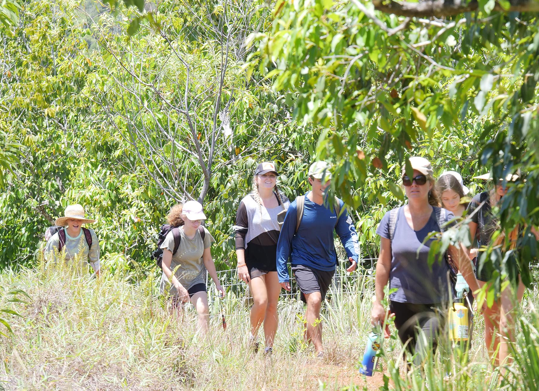 <p>The hike takes the volunteers to a location on Kalahe'e Ridge where they will remove invasive plants from areas previously planted with koa trees.</p>