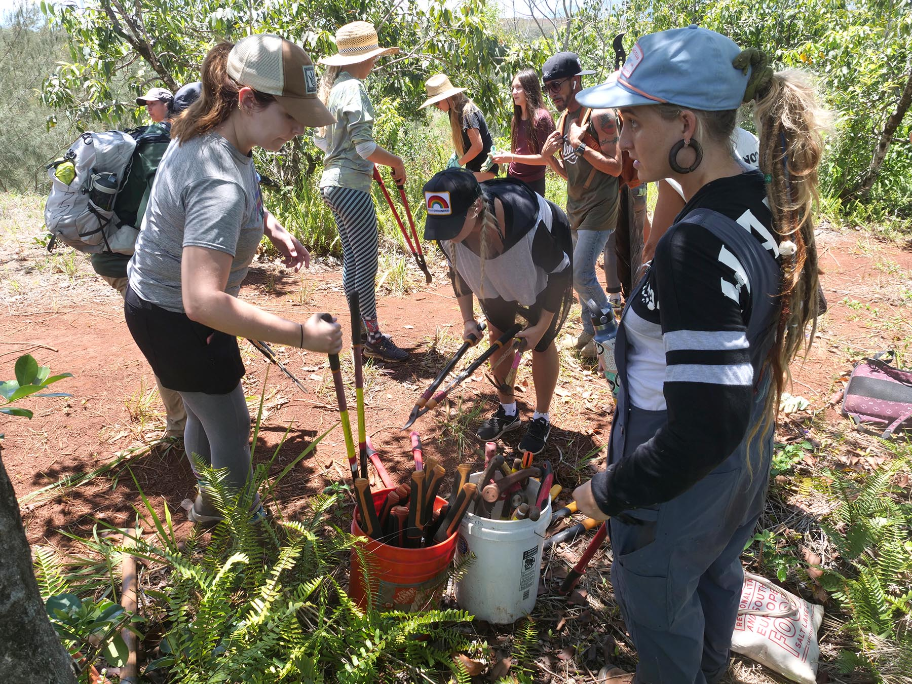 <p>Various gardening and landscaping tools are used to remove small growth ironwood and strawberry guava trees.</p>