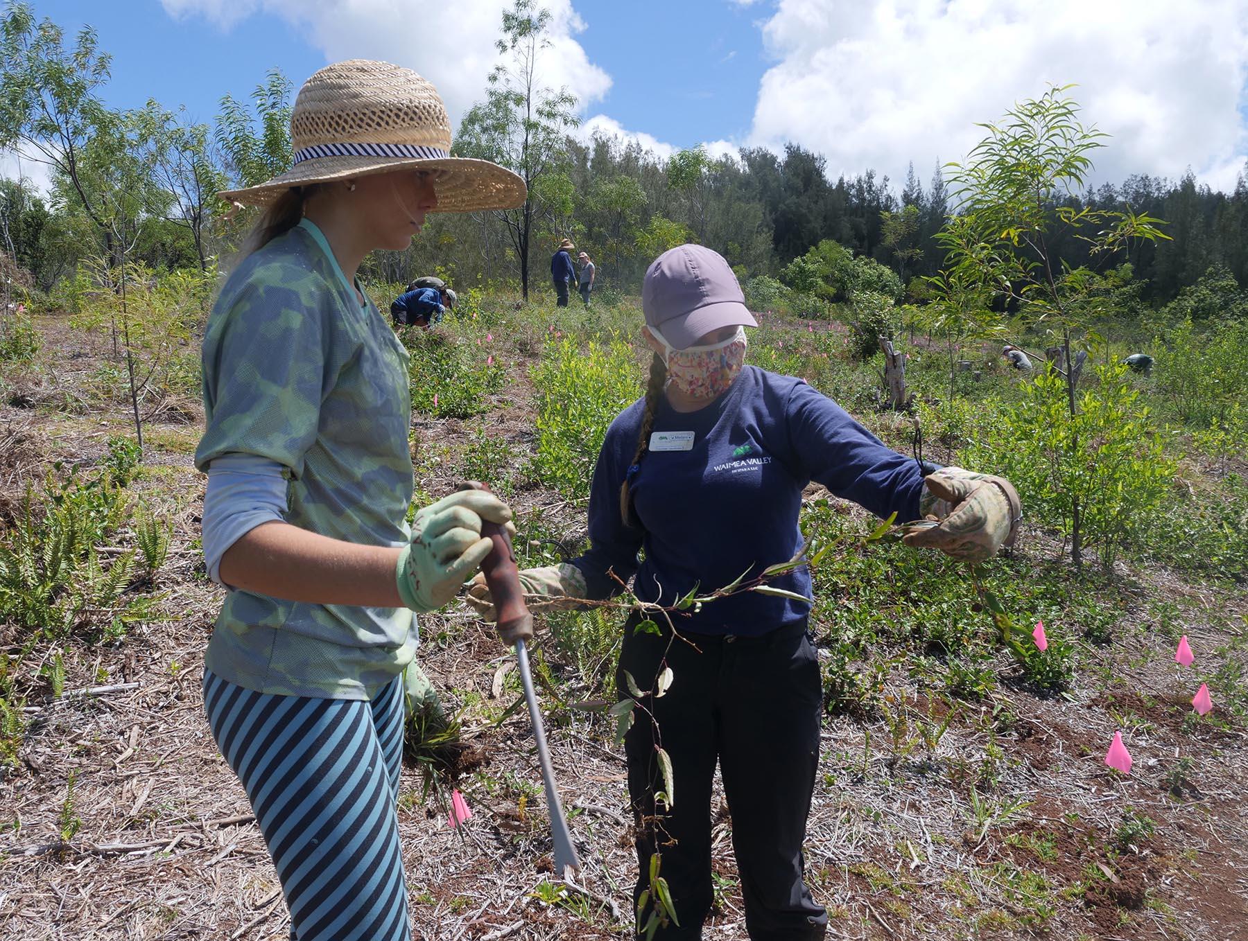 <p>Melanie Spielman, right, explains the growth pattern of an invasive weed to volunteer Marley Beschem of Waialua High School.</p>