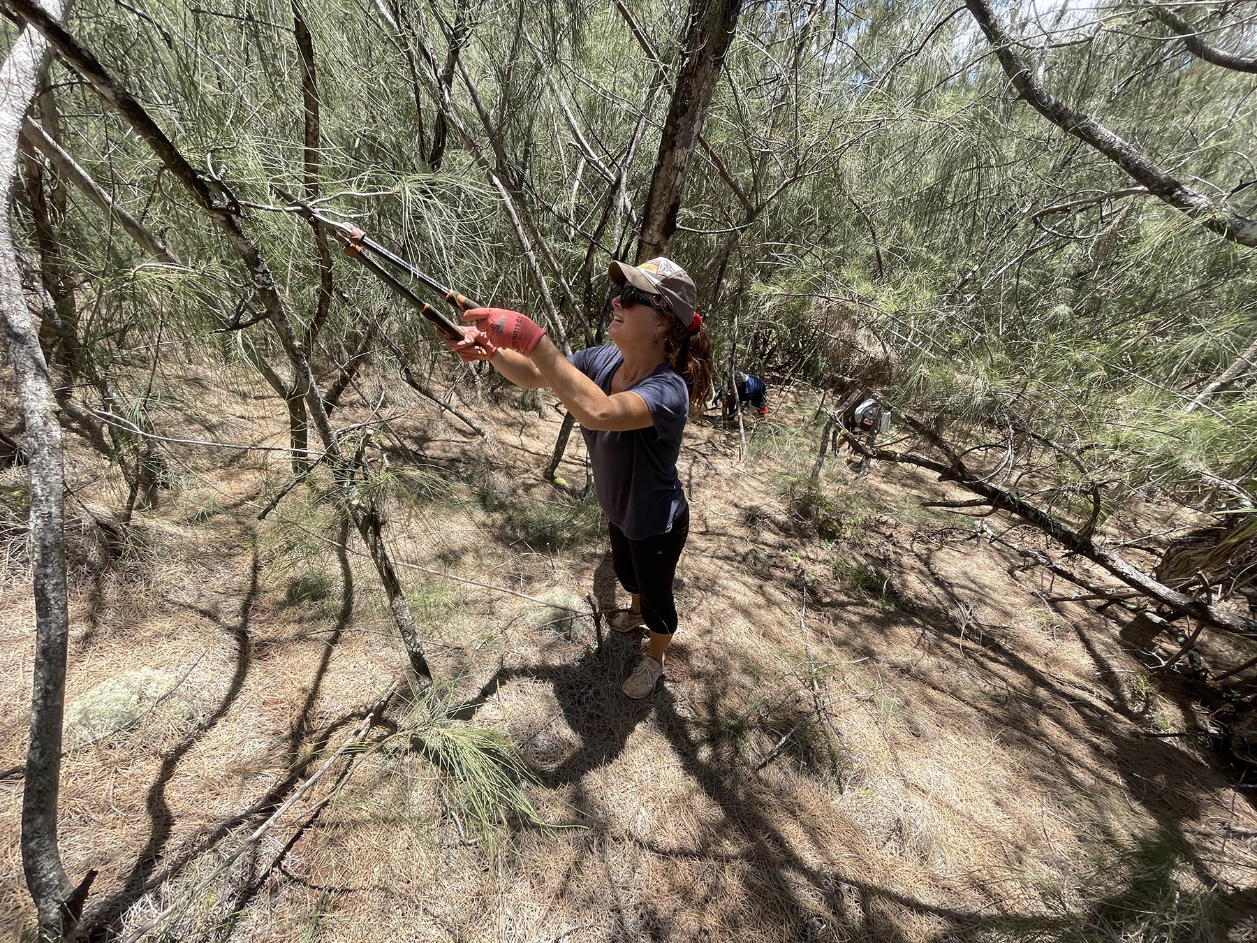 <p>Patti Sober of Waialua cuts small branches from ironwood trees in preparation for a chainsaw crew to remove the invasive species.</p>