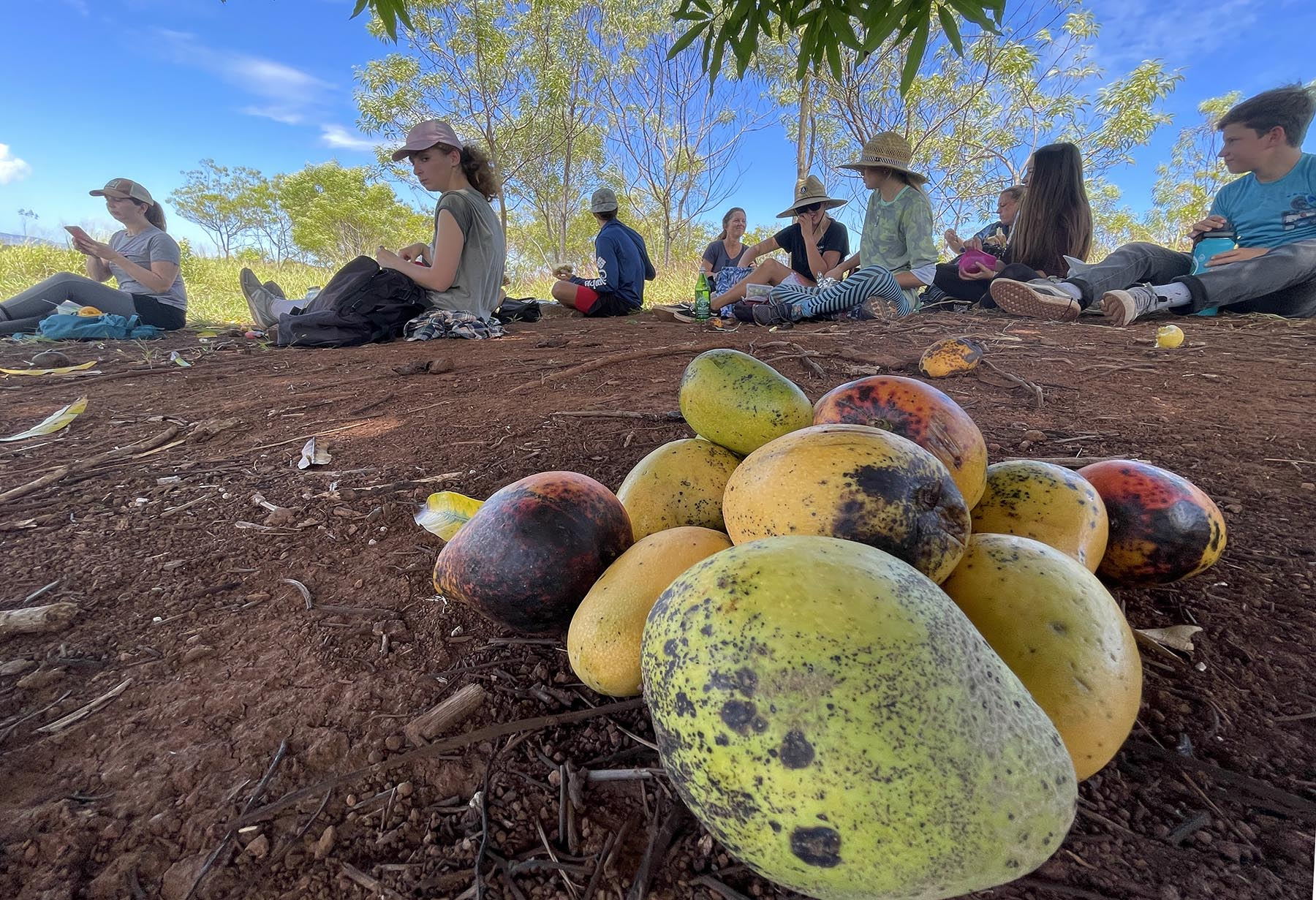<p>Volunteers take a break from work and the sun beneath a lone mango tree on Kalahe'e Ridge in the Waimea Valley. The workday begins at 9 a.m. and lasts until 3 p.m. so volunteers take frequent breaks to conserve energy and enjoy the beauty of the valley.</p>