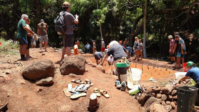 Participants each planted huli in the newly opened loi kalo, July 30, 2017, Kahoma, Maui.