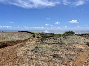 Native Seabirds Keep Turning Up Dead On A Popular Kauai Walking Trail