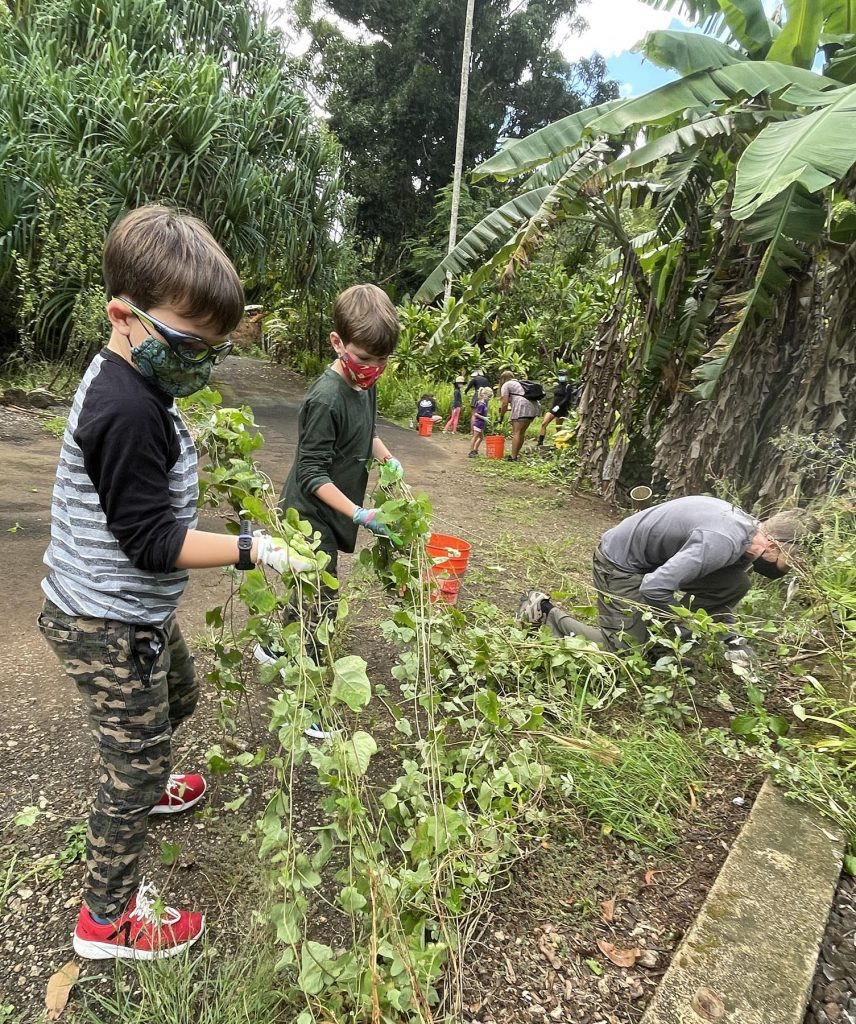 Alex (left) and Oliver Lillegard (center) help their father Walter Lillegard (right) pull invasive vines out of the ground surrounding native plants in the botanical gardens of Waimea Valley during the Ohana Volunteer Day on Saturday, September, 9, 2021.  The ongoing ohana volunteer days are geared to families with younger kids under the age of 12 and provide opportunities for families to get involved, give back, and learn. (Ronen Zilberman photo Civil Beat)