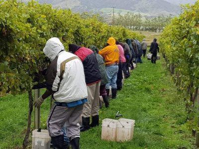 Seasonal Farm Work Has Been A Lifeline For Pacific Islanders. The Pandemic Made It Harder