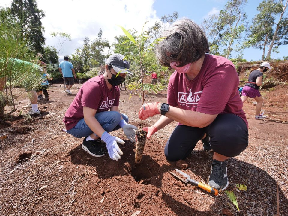 Richelle Doctolero (left) and Crystal Theel (right), volunteers for the HUGS (Help, Understanding & Group Support) nonprofit organization, plant a young Koa tree into a memorial garden located at the Sunset Ranch on the north shore of Oahu, Saturday, September 11, 2021. Land for the memorial garden was donated by the Sunset Ranch and tree saplings were donated by Waimea Valley to help with the HUGS mission to provide support, compassion and aloha for Hawaii families with seriously ill children. (Ronen Zilberman photo Civil Beat)