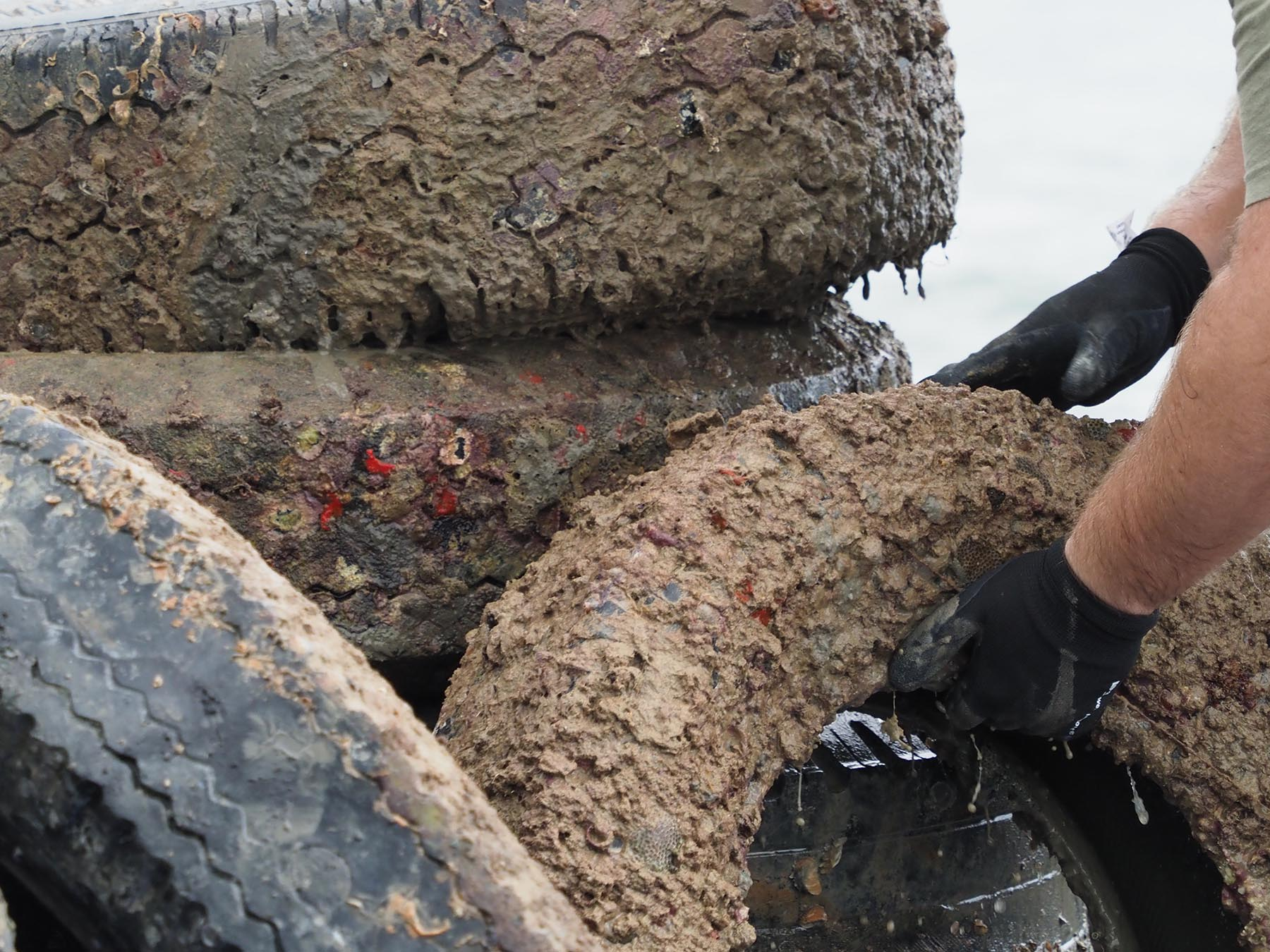 <p>Tires collected during the Kaneohe Bay cleanup will be picked up and taken away for incineration. Ocean Defense Alliance volunteers were able to procure a fee waiver from the city to have the tires disposed of at no cost.</p>