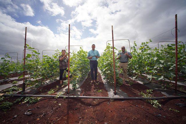 Left to right, Senator Michelle Kidani, Congressman Kai Kahele and right, Senator Donovan Dela Cruz pose for a photograph at Ho Farms in Wahiawa.