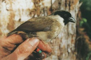 Nine Endangered Species In Hawaii Are Now Extinct