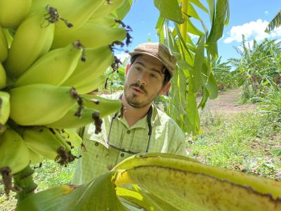 Saving Hawaii's Banana Industry 'One Good Banana' At A Time