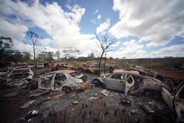 Scores of burned cars sit on the ADC agriculature land near across Poamoho Camp outside Wahiawa.