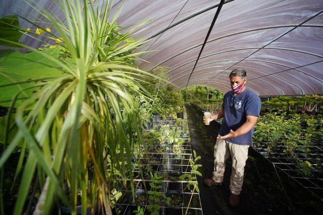 Rick Barboza owner of Hui Ku Maoli Ola walks thru his greenhouse. Thieves stole some of his native plants.