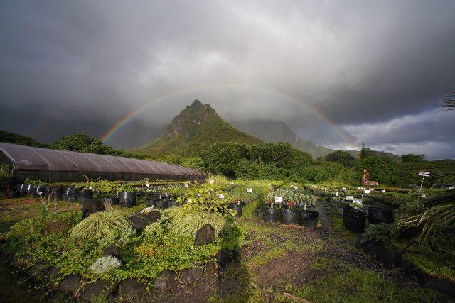 Rainbow forms along the Koolau mountains while standing at Hui Ku Maoli Ola.