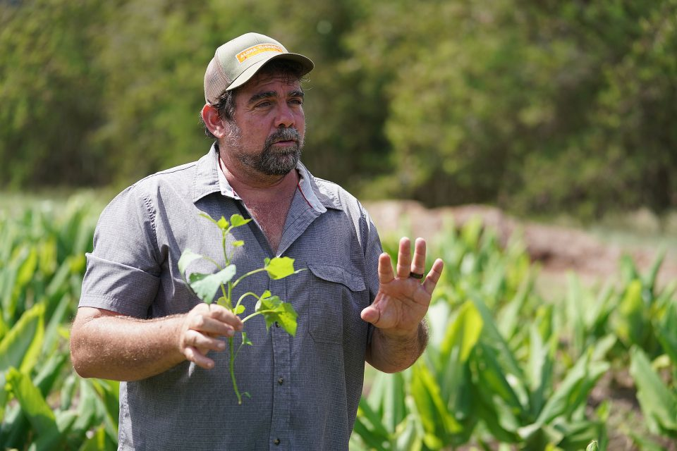 How The Hunt For The Perfect Sweet Potato May Help Hawaii Farmers