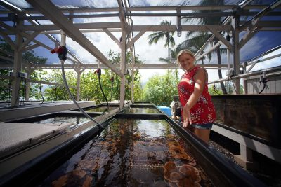 How Cancer Research May Play A Role In Saving Hawaii's Coral Reefs