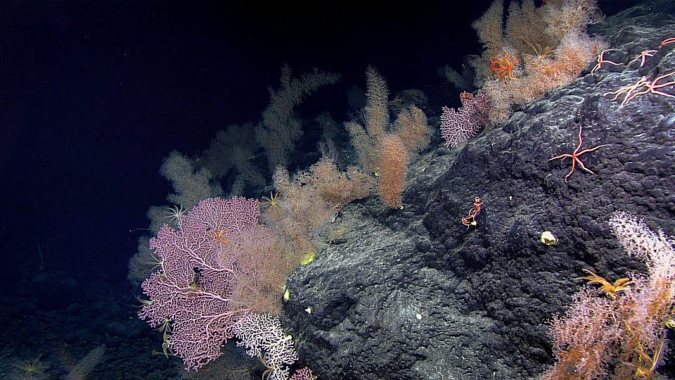 We May Know Less About The Deep Sea Than The Moon. Should It Be Mined?
